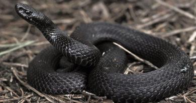 Пострадали от змей