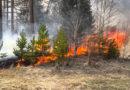 За полтора месяца в Кировской области произошло 15 лесных пожаров