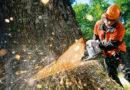 При заготовке леса погиб человек