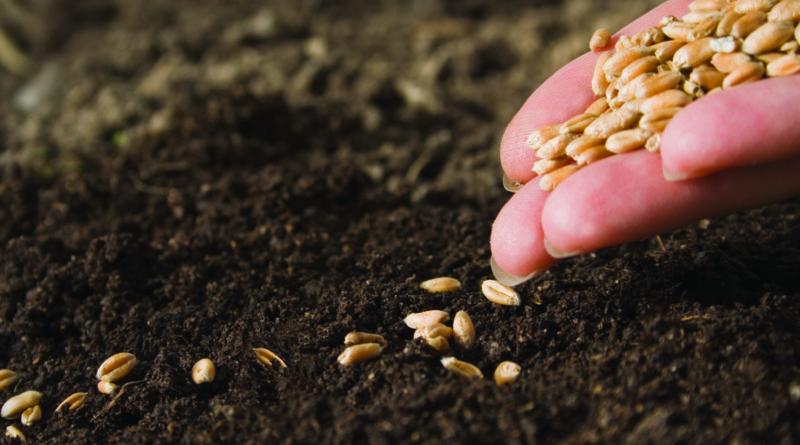 Агрофирма начала полевые работы